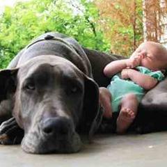 Hobbi kutyák számára