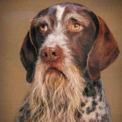 Öreg kutyák számára